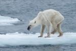 Cambio Climático Habrá Provocado Medio Millón De Muertes En 2050