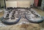 Mamut de mas de 130,000 años
