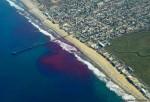 El mar de california está teñido de rosa
