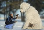 Juji el perro gigante de Intagram